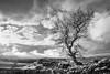 Lone Tree at Winskill Stones 2 MONO (G V Fennell) Tags: autumn clouds drystonewall hensidelane landscape limestonepavement mono malhamtarnestate pennineway rocks trees winskillstones yorkshire yorkshiredales