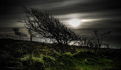 Grass Tsunami (p.g604) Tags: grass tsunami beachy head windswept tree bush shrub green diffused sky clouds whispy sunset england pentax k1 wideangle