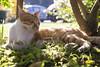 貓的姿態_022 (米漿 專賣店) Tags: nikkor 2470mm f28e ed vr cat 貓