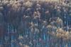 Parco Nazionale del Pollino (iLouis81) Tags: pollino basilicata parconazionaledelpollino lucania panorami colori inverno neve fotografia foto passione italia italy sud montagna trekking escursione esplorare