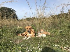 (Andrea Schaffer) Tags: 2017 december winter italia italy italie sicilia sicily selinunte dog puppies stray sicile italien archeologicalpark parcoarcheologico sizilien 西西里岛 シチリア島 sélinonte europe southernitaly mother babies parcarcheologique σικελία sicilija r صقلية sicilya