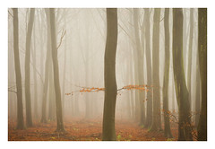 Friston Forest - December 21st (Edd Allen) Tags: forest trees tree treescape mist nikond610 nikon d610 70200mm landscape country countryside atmosphere atmospheric sunrise uk eastsussex woods woodland serene bucolic melancholy foliage leaves fristonforest fog sunlight frost winter art bright photography autumn