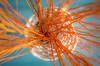 Orange Network (Royal Bloke) Tags: orange blue vase twigs sticks