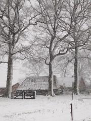 Winter at the countryside (EvelienNL) Tags: winter snow snowy sneeuw besneeuwd white wit landscape landschap rural countryside platteland buitegebied farm barn boerderij schuur stal stable thatched trees bomen snowflakes sneeuwvlokken snowstorm sneeuwstorm sneeuwbui weather putten dutch holland netherlands