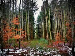 mystic wood (almresi1) Tags: forest wald trees bäume lichtung baum winter snow schnee nature landscape landschaft germany adelberg schorndorf