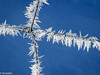 Needles (brookis-photography) Tags: needles ice crystals blue winter fence
