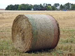 All rolled up (Lexie's Mum) Tags: walk walking nature countryside warwickshire harvest