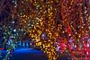 Night Lights (James Neeley) Tags: lights holiday christmas jamesneeley