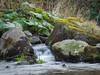 Bachlauf (achim-51) Tags: gras wasserfall felsen wasser landschaft bach panasonic lumix dmcg5 natur nrw möhnesee