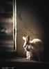 (G.Mallofret) Tags: rabbit conejo sombras nature naturaleza gmallofret mallofret canon6d luz light flickrtravelaward