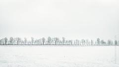 Baumreihe im Schnee (Daniel Stroebel) Tags: winter snow cold trees field nature landscape countryside forest minimalist minimalism monochrome black white bw germany bavaria danielströbel danielstroebel photographer photoartist burgthann nikon d500 schnee kalt bäume feld natur landschaft wald minimalistisch einfarbig schwarz weis sw deutschland bayern fotograf