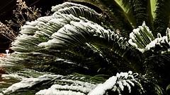 Snow in Austin! 12.07.2017 (lensofjon) Tags: austintx atx austintexas texas texassnow austinsnow nightshots shotoniphone winter southaustin green 16x9 nightsnow