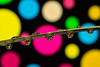 Spotty dots (abiward) Tags: spots dots patterns multicolours nikond600 nikon droplet waterdroplets macro macrophotography closeup refraction