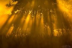 Dress of lights (lookashG) Tags: sonyslta99v tamronsp150600mmf563diusda011s backlight beamsoflight breakofday dawn daybreak drzewo fog grass grassland haze lato light lightbeams lightrays lookashggmailcom meadow meadows mgła mgły mist morning natura nature orange podświetlenie pomarańcz pomarańczowy poranek promienieświatła ranek rano rays raysoflight rearlight summer summertime sun sunrise sunnyseason sunup słońce słupyświatła trawa tree tylneświatło wet wiązkiświatła wschód wschódsłońca zaranie łukaszgwiździel łąka łąki światło świt