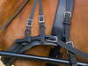 trotting harness (tonyrolls) Tags: horse straps buckles trotting harness