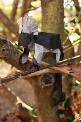 IOIO 2017 - Cottontop Tamarin 3 (Tankoda) Tags: kunsulu jilkishiyeva travis nolan origami art tankoda paper black white nature cottontop tamarin double tissue mc 18 inches monkey branches plants outside ioio 2017
