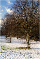 Brrrr (Lotsapix) Tags: corby northamptonshire trees weather snow white