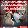 کوئٹہ :کے نواحی علاقے مغربی باس پرسپاہ صحابہ کے دشتگردوں نے گاڑی پر فائرنگ کی ۔جس کے نتیجے میں ہزارہ کمیونٹی سے تعلق رکھنے والے 4 شیعہ زخمی۔ (ShiiteMedia) Tags: shia news killing 2017 shiite media urdu pakistan islami payam aein abbas muharam 1439 ashura genocide شیعت میڈیا ، شیعہ نیوز، channel q12 shiitenews abna newa latest india alert karachi tv shiatv110