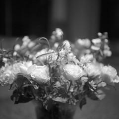 White roses (Rosenthal Photography) Tags: treu ff120 ilforddelta3200 6x6 asa3200 schwarzweiss anderlingen blumenstraus rosen familie mittelformat städte rolleiflex35f bw blume 20171105 analog bnw dörfer siedlungen roses indoor lowlight december autumn whiteroses rose mood rollei rolleiflex 35f sk schneiderkreuznach 75mm f35 ilford delta rollinar rollinar2 epson v800 backandwhite mediumformat film rollfilm analogue