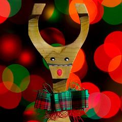 Wooden Rudolph (arbyreed) Tags: arbyreed macromondays memberschoicebokeh craft decoration folkart folkartrudolph christmasdecoration crastchristmasdecoration christmascraft close closeup squareformat boken lights colorful reindeer rudolphtherednosedreindeer