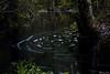 AY6A5596 (fcruse) Tags: cruse crusefoto 2018 vinter canon5dmarkiv natur skog nature forest tyrestanationalpark longexposure stockholm sweden se tyresta