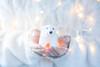 ¡Hasta el año que viene, osito polar! (Monica Fiuza) Tags: inyourhands entusmanos white polarbear osopolar xmas christmas navidad