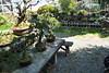 Bonsai (itsmeari) Tags: hakone japan fujiya hotel miyanoshita bonsai