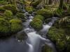 Mossy Stones - Duddon Valley (Craig Hannah) Tags: stone moss duddonvalley lakedistrict stream beck longexposure bigstopper january 2018 craighannah vegetation movement cumbria england uk