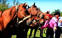 Tropilla El Horcón, de Ramon Ojeda (Eduardo Amorim) Tags: cavalos caballos horses chevaux cavalli pferde caballo horse cheval cavallo cavall jineteada gineteada pferd cavalo cavall馬 حصان 马 лошадь crioulo criollo crioulos criollos cavalocrioulo cavaloscrioulos caballocriollo caballoscriollos paradaacuña montecaseros corrientes provinciadecorrientes corrientesprovince argentina sudamérica südamerika suramérica américadosul southamerica amériquedusud americameridionale américadelsur americadelsud eduardoamorim gaúcha gaúchas gaucha gauchas mulher mujer woman femme donna