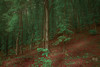 Sylvan paths (DeeBeeDoop) Tags: forest woods green spring alive earth nature landscape trees