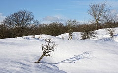 AWD - dressed in white (leuntje) Tags: awd dezilk netherlands snow winter dunes amsterdamsewaterleidingduinen