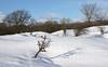 AWD - dressed in white (leuntje) Tags: awd dezilk netherlands snow winter dunes amsterdamsewaterleidingduinen