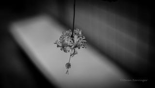 dangling