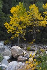 IMG00771 yellow (Seng  Merrill) Tags: dickmerrill sigmasd10 sigma50mmf28 yosemitenp california