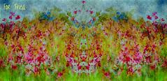 HAPPY BIRTHDAY THEA..........      Garden Impressions. (PEA 2015) Tags: garden flowers
