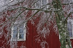 Hälsingland red (Stefano Rugolo) Tags: stefanorugolo pentax k5 pentaxk5 smcpentaxm50mmf17 house red wood texture branches tree frost bark hälsingland sweden countryside window