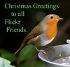 Couldn't be Christmas without a robin ! (Blossom's Mom.(Sheila Hess)) Tags: bird robin christmasgreeting december 3027