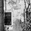 (Nico_1962) Tags: rangefinder meetzoeker leica zeiss planar 50mm wall muur klimop boom gouda nederland leicam manualfocus thenetherlands zwartwit bw blackandwhite