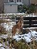 Snow Patrol (Bricheno) Tags: ice canal unioncanal edinburgh bricheno scotland escocia schottland écosse scozia escòcia szkocja scoția 蘇格蘭 स्कॉटलैंड σκωτία dog