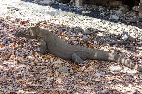 95-Labuan Bajo e Islas de Komodo (139)