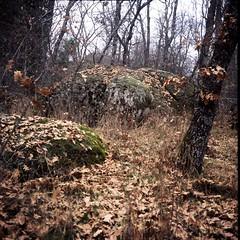 Moss (davidgarciadorado) Tags: forest stones trees leaves winter landscape diapositive film rolleiflex velvia ngc ithinkthisisart