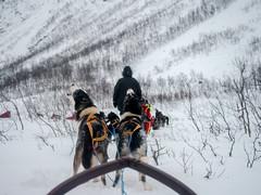 Dog sledge-4 (joaquinain) Tags: tromso noruega norway dog sledge snow storm nieve trineo perros olympus omd em12 zuiko