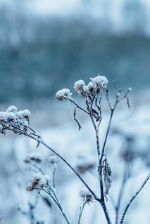 January Snow III