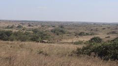 2017-12-28 15.50.02 (dcwpugh) Tags: travel nairobi kenya safari nairobinationalpark