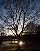 2017_12_0356 (petermit2) Tags: backlit silhouette tree clumberpark clumber sherwoodforest sherwood nottinghamshire nationaltrust nt