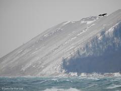 Eagle Flight! (JamesEyeViewPhotography) Tags: bald eagle birds lake michigan water waves sand dunes beach wind winter sky snow northernmichigan landscape nature sleepingbeardunes nationallakeshore january trees greatlakes jameseyeviewphotography