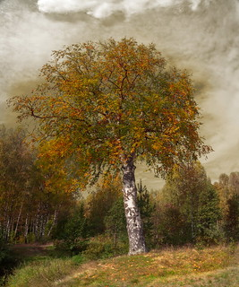 life-is-a-birch
