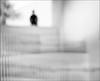 F_47A3045-1-BW-Canon 5DIII-Tamron 28-300mm-May Lee 廖藹淳 (May-margy) Tags: maymargy bw 黑白 伴 斜梯 扶手 建築 窗框 樹 人像 背影 剪影 模糊 散景 孤 街拍 streetviewphotography 天馬行空鏡頭的異想世界 mylensandmyimagination 心象意象與影像 naturalcoincidencethrumylens 線條造型與光影 linesformandlightandshadow 方形 rectangle 幾何構圖 humaningeometry 點人 點樹 高雄市 台灣 中華民國 taiwan repofchina f47a30451bw portrait blur bokeh silhouette viewfromback backlighting 逆光 building stairs rails tree kaohsiungcity canon5diii tamron28300mm maylee廖藹淳