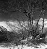 Pto de la Morcuera, Madrid. (fcuencadiaz) Tags: analogica fotografiaargentica film paisajes pelicula sierrademadrid sierradeguadarrama plustek byw ilfordfp4 rolleiflex twinreflex twinlens planar