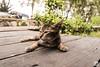 randomCat (Laurensius Tony) Tags: kucing binatang